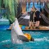 Дельфинарии, океанариумы в Шарапово